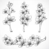 Fényképek Cseresznyefa virágzik. Fekete-fehér Vintage kézzel rajzolt vektoros illusztráció vázlat stílusú. Elszigetelt elemek