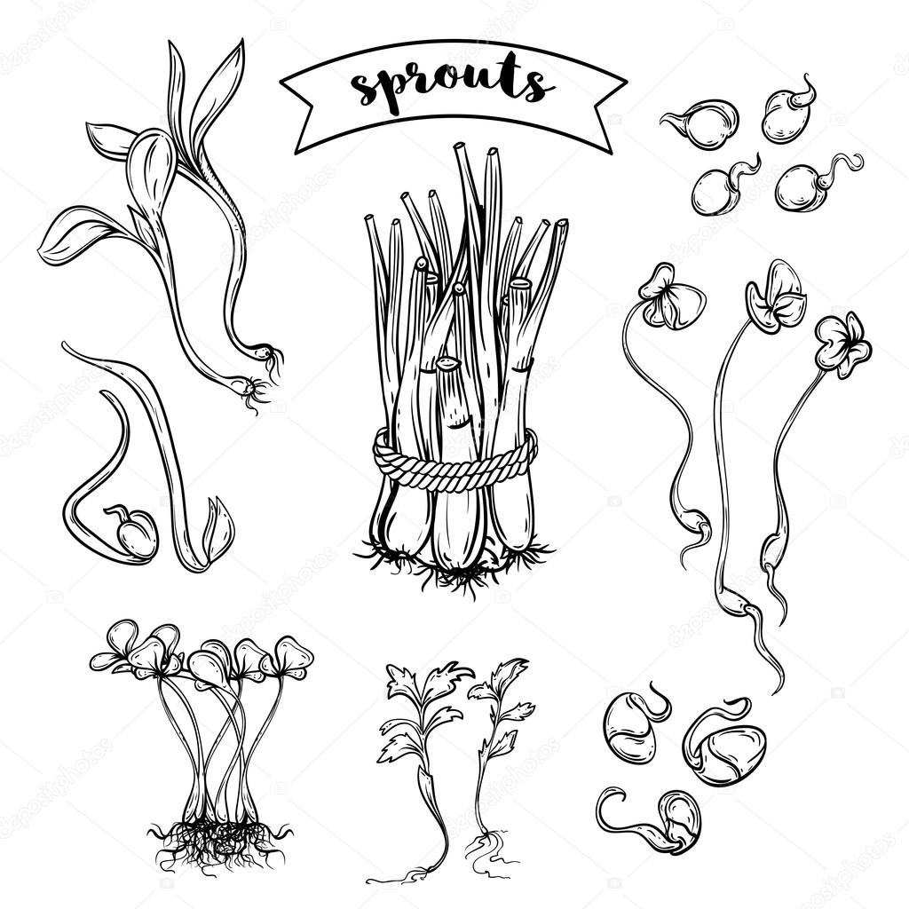 Sprouts plants set. Isolated elements. Black and white vector hand drawn illustration