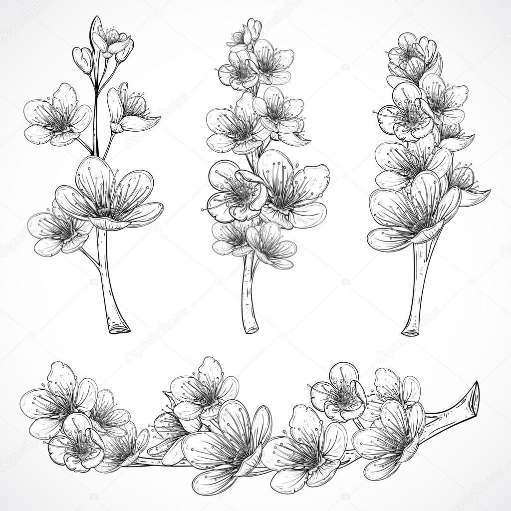 Cherry tree blossom. Vintage black and white hand drawn vector illustration in sketch style. Isolated elements.