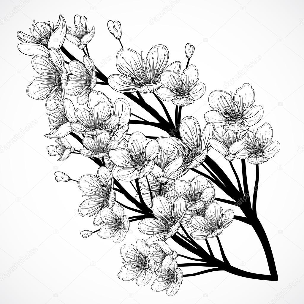 Flor De Cerejeira Ilustração Vetorial Mão Desenhada Vintage
