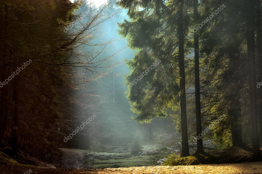 light rays through the trees . late autumn landscape