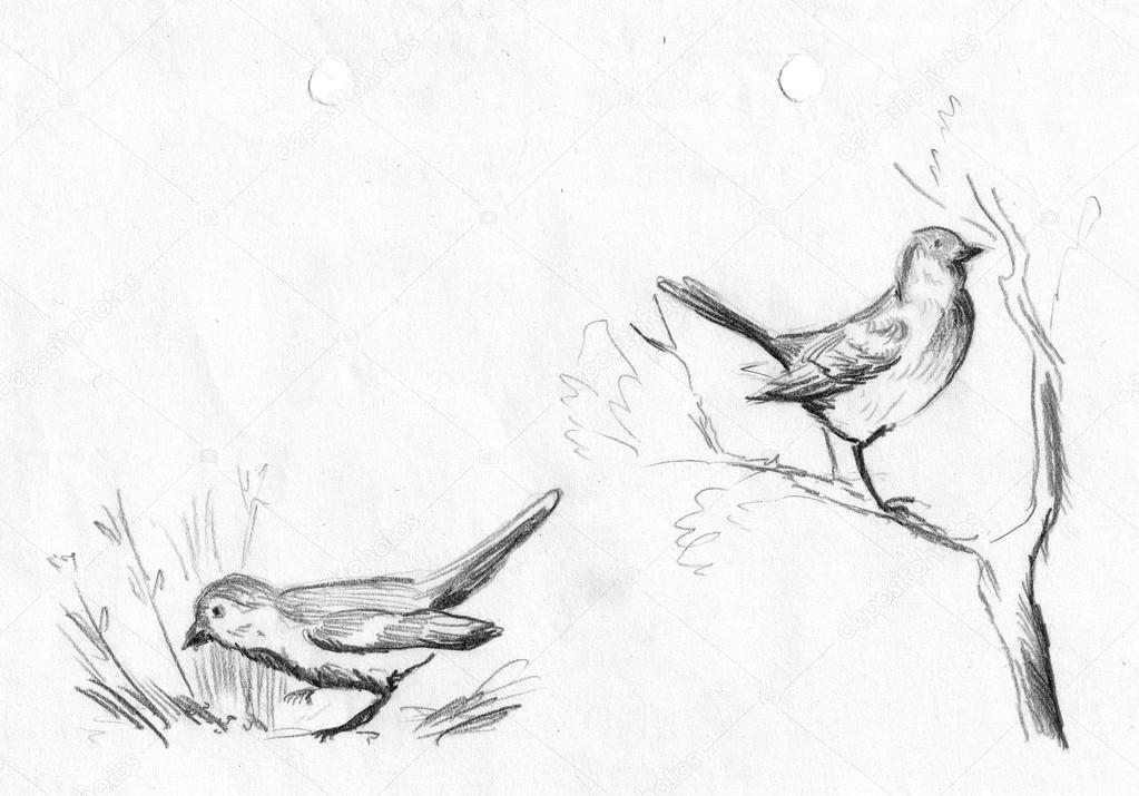 Serçeler çizim Kalem Seti El çizimi Boyalı çizim Kalem Kroki