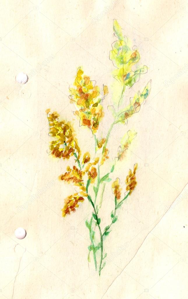 Original summer flowers yellow flower watercolor illustration original summer flowers yellow flower watercolor illustration hands drawing stock photo mightylinksfo
