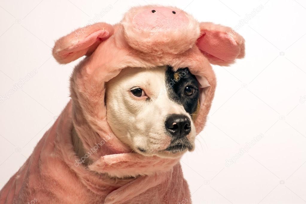 hund in ein schwein halloween kost m stockfoto walkingthedog 124738240. Black Bedroom Furniture Sets. Home Design Ideas