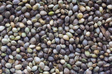 Hemp seeds background