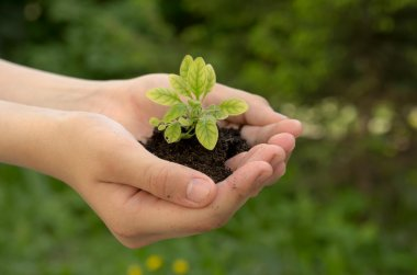 Sprout plants in human hands