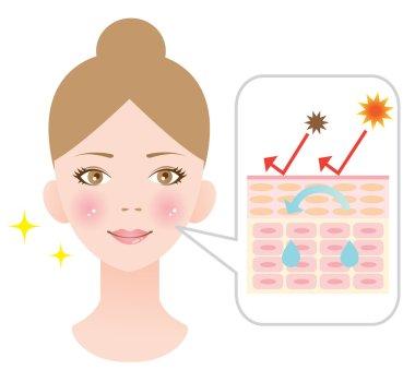 diagram of moisture skin