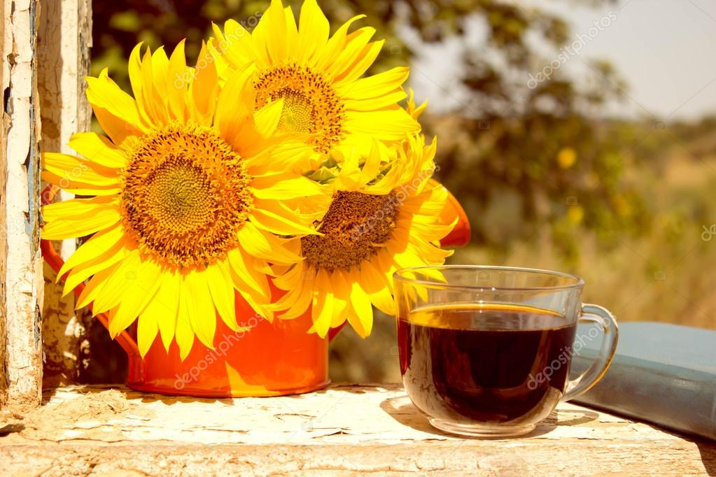 Sunflower, coffee, summer