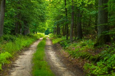 Natural polish landscape with forest path.