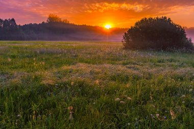 Vibrant summer sunrise over foggy, magical meadow