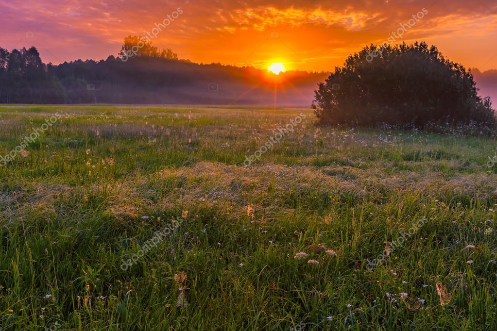 Vibrant summer sunrise over foggy, magical meadow