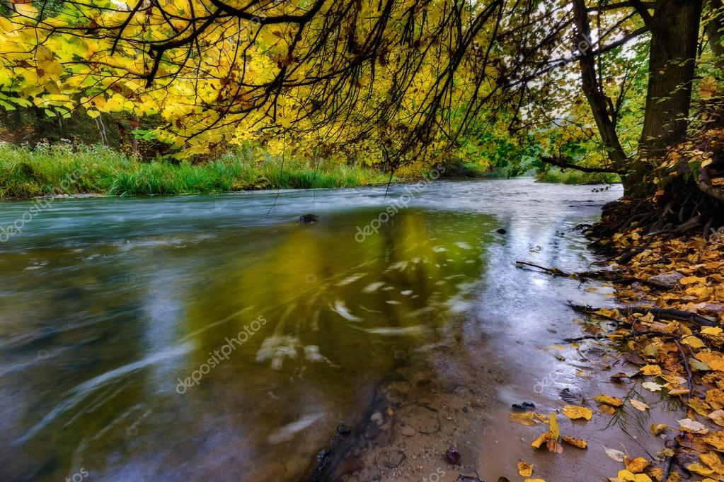 Wild river in autumnal colorful forest