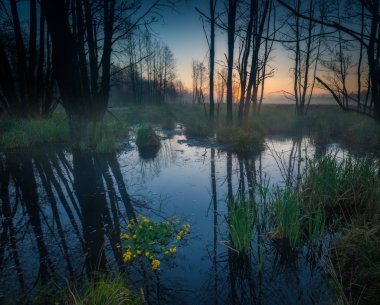 Sunrise over foggy wetlands