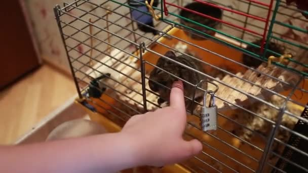 trohaye hand mouse in a cage