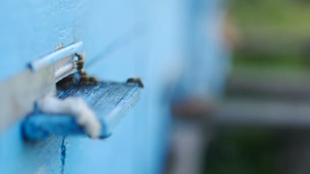 včely medonosné rojení a létat kolem jejich úlu