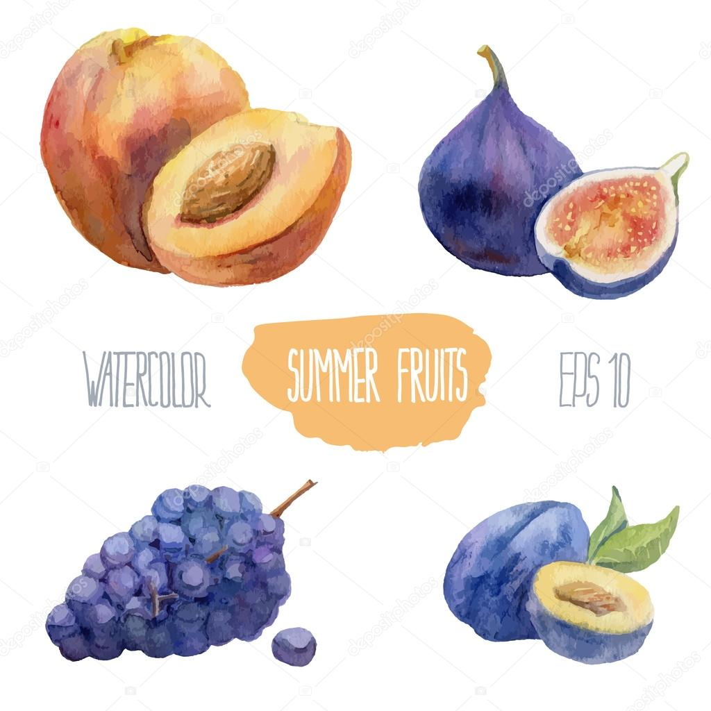 Summer fruits. Vector watercolor illustration.