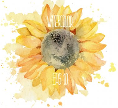 Sunflower with splahes. Vector watercolor illustration.