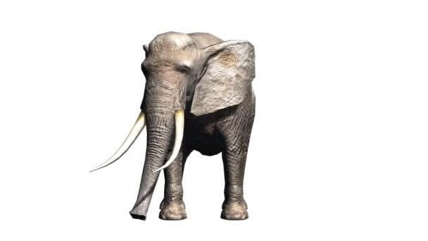 3D-s cg visszaadás-ból egy elefánt