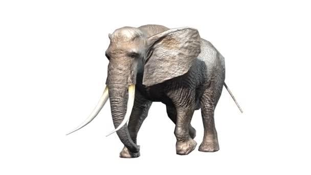 vykreslování 3D cg slona