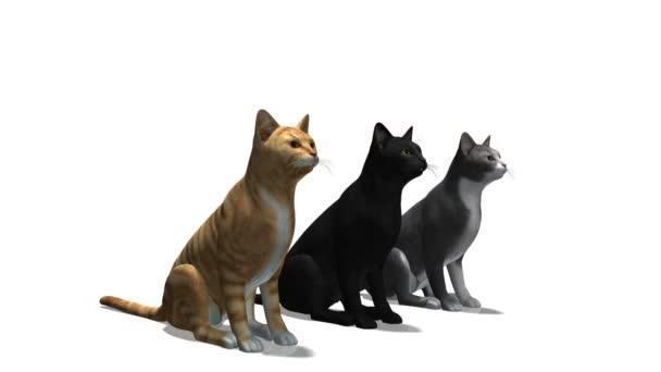 3 macskák