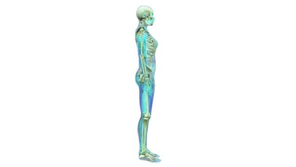 body human