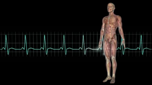 male figure and electrocardiogram