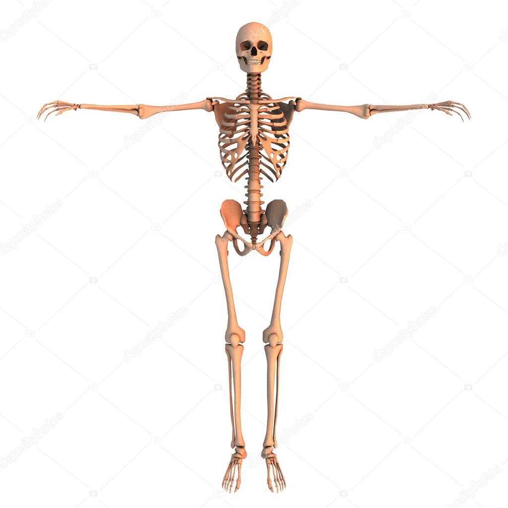 технология в свердловской области скелет с тремя фотографиями могут