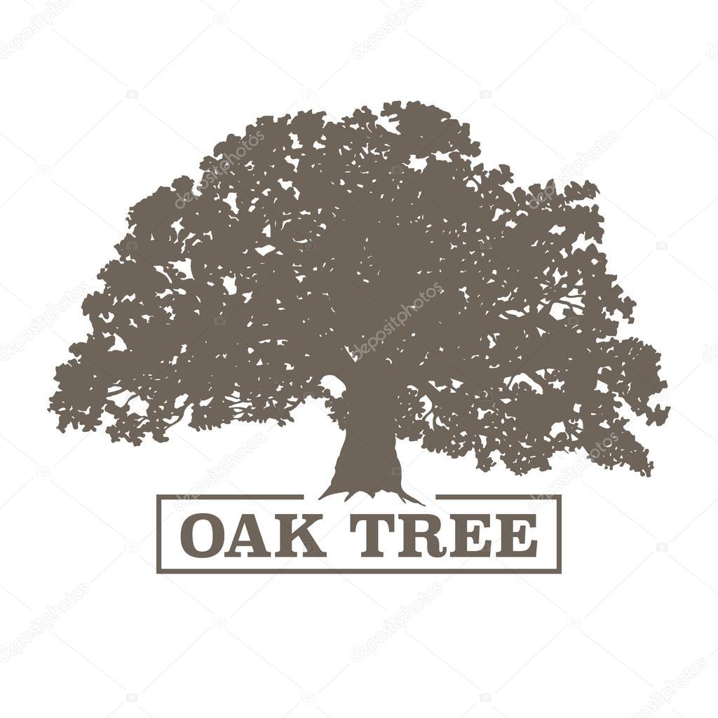 Oak tree vector illustration stock vector