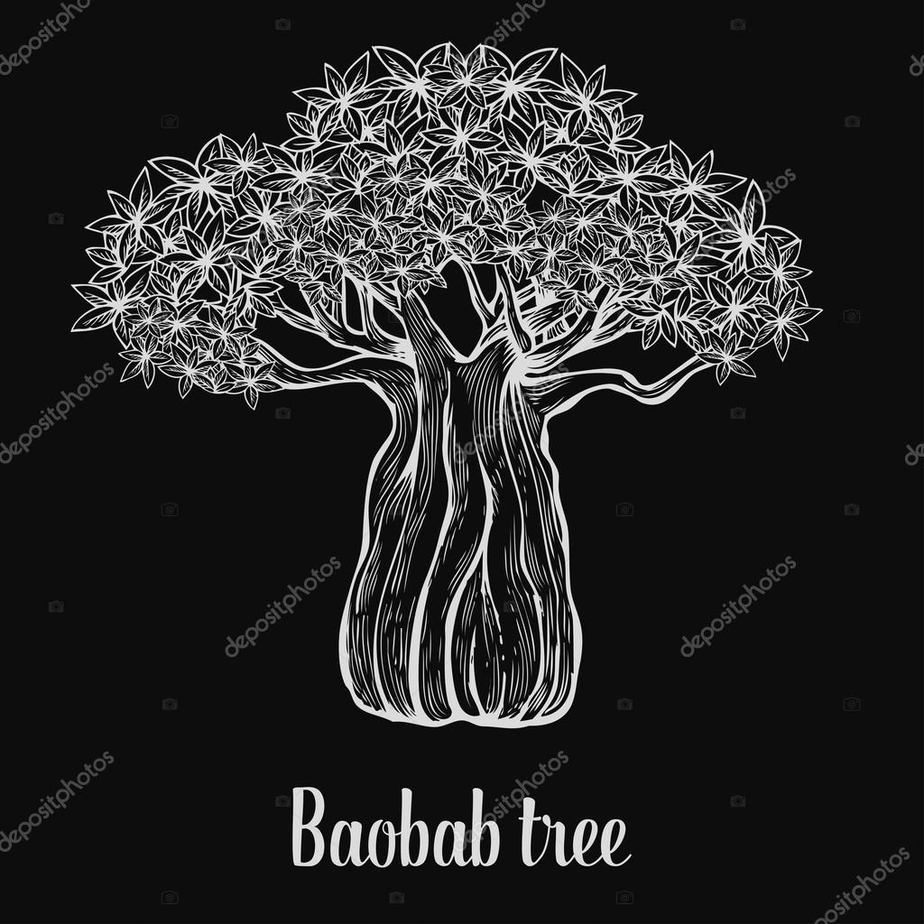 Baobab tree, leaf, engraving vintage Hand drawn sketch vector illustration. White on black background.