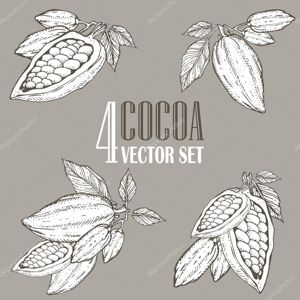 Hand painted cocoa botany illustration set. Decorative doodles of healthy nutrient food.