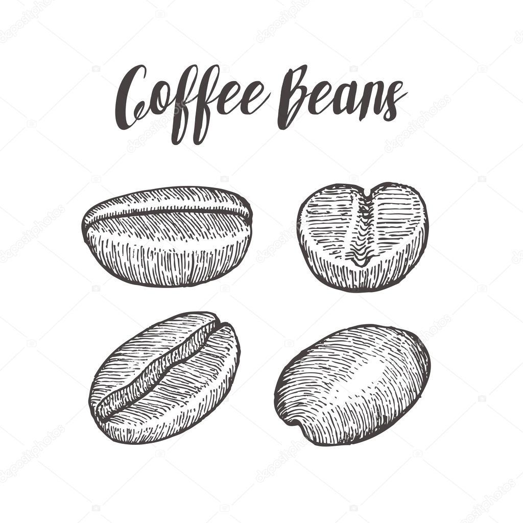 Coffee bean, seed, natural organic caffeine fruit. Hand ...