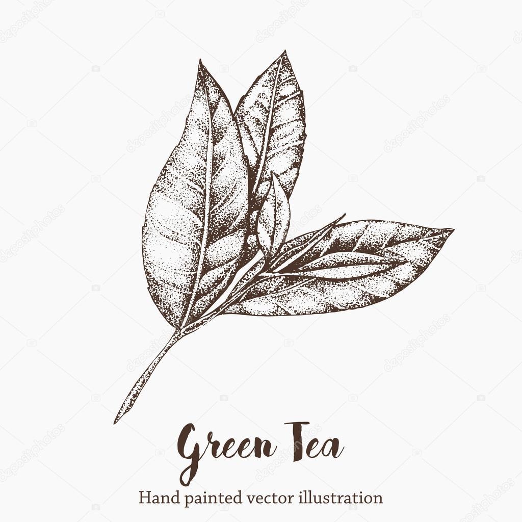 ᐈ tea stock illustrations royalty free tea graphics vectors download on depositphotos https depositphotos com 102431338 stock illustration green tea leaf vector illustration html