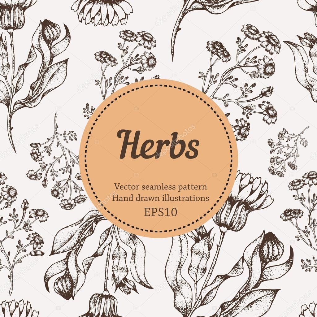 Medicine herb vector seamless nature pattern. Hand drawing sketch illustration