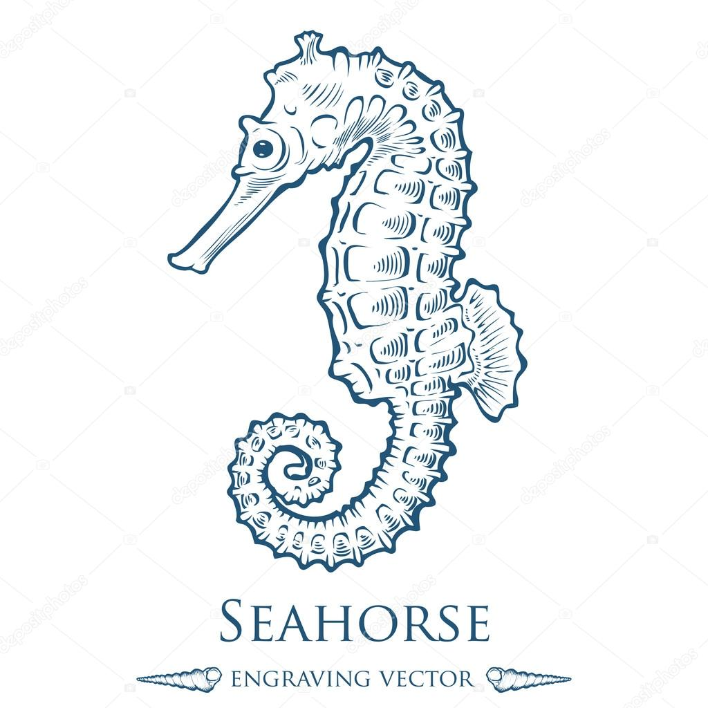 Seahorse sea horse nature ocean aquatic underwater vector. Hand drawn marine engraving illustration on white background