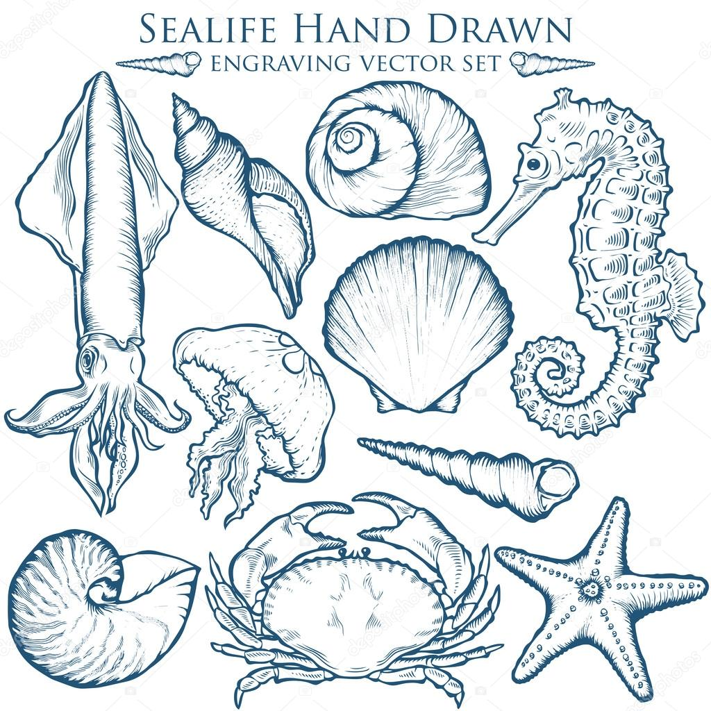 Seashell, sea shell, starfish, squid, jellyfish, seahorse, crab nature ocean aquatic underwater vector set. Hand drawn marine engraving illustration on white background