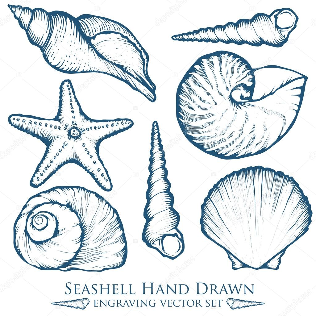 Seashell, sea shell, starfish nature ocean aquatic underwater vector set. Hand drawn marine engraving illustration on white background