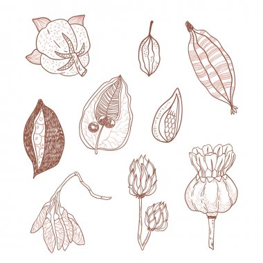 Outline vector set with seeds and seed pods in autumn colors. Organic natural shapes.