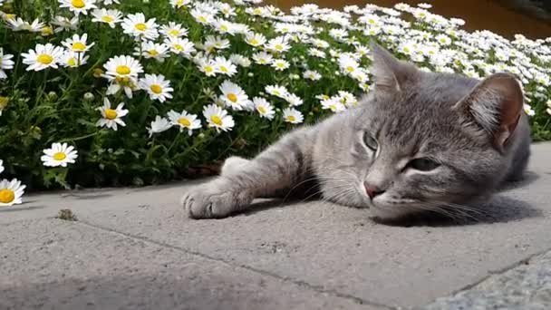 macska alszik a szabadtéri