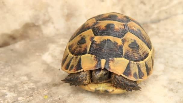 Turtle kő