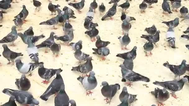 holubi stádo na mimo