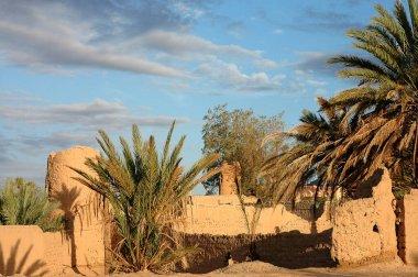 Palm grove of Figuig Morocco