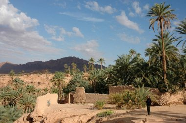 Palm grove of  Figuig in Morocco