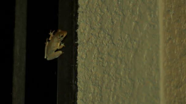 Tree frog at night inside of porch