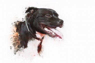 Dog Pit bull Terrier
