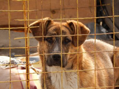 Homeless dog in kennel at animal shelter