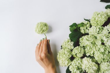 Female hand making decoration of green flowers on a white backgr