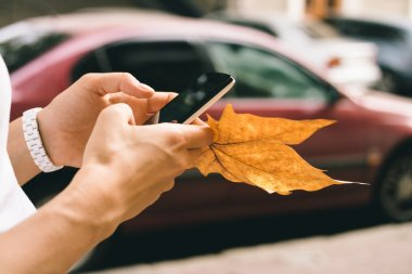 Female hand holding a mobile phone and fallen autumn leaf close-