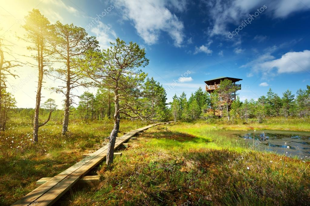 Viru bogs at Lahemaa national park Royalty Free Photo, Stock Image by © candy18 #103363790