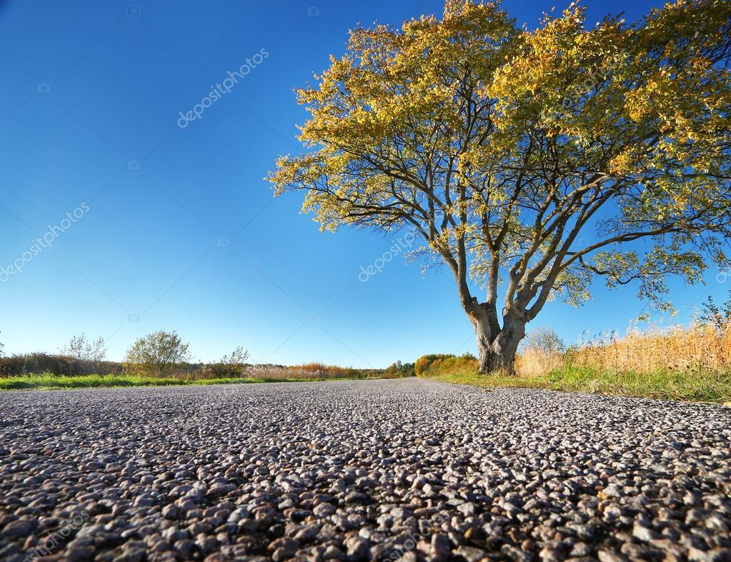 Elm tree on the road side