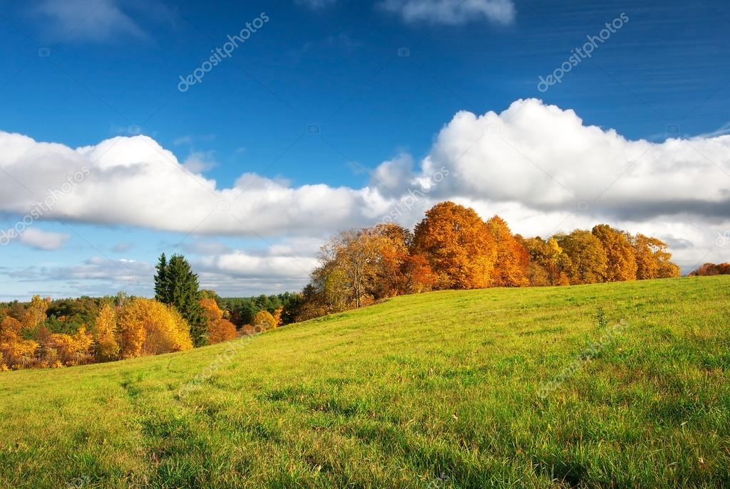 Autumnal landscape on the field